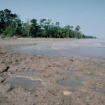 The low water period along the lower Amazon River exposes recently deposited alluvium.