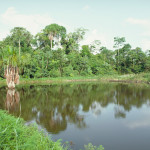 Aquaculture ponds are now a common feature of human landscapes in the Amazon.