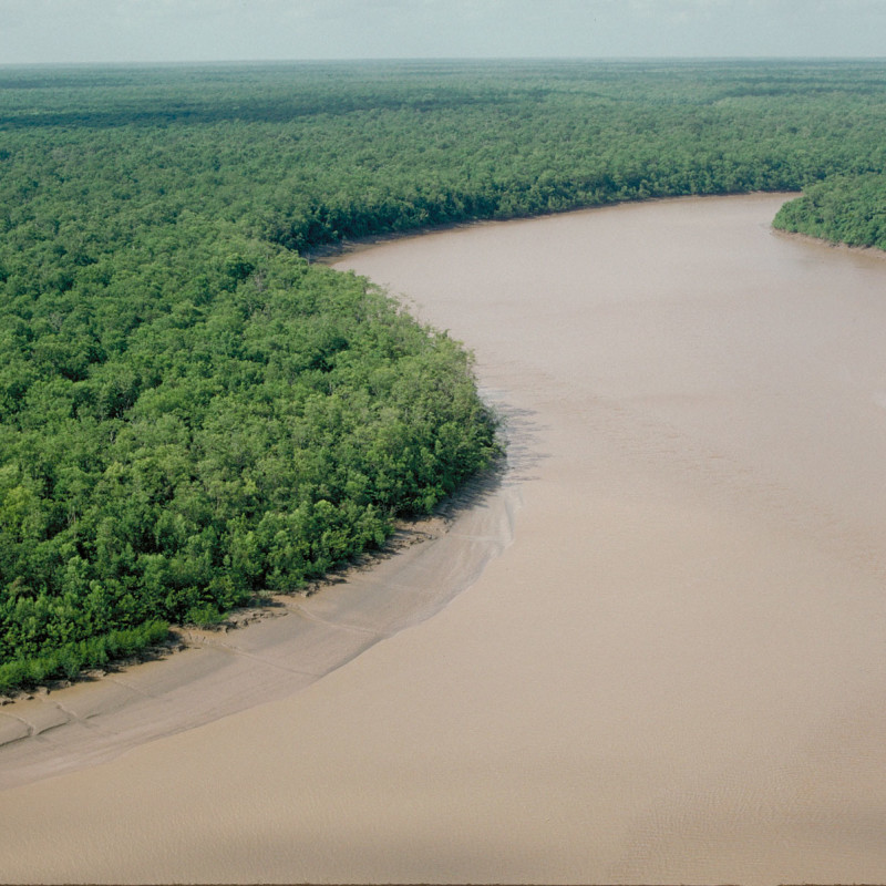 Mangrove along the Amapá coast just north of the Amazon River mouth that indicates a mixture of fresh and salt water.