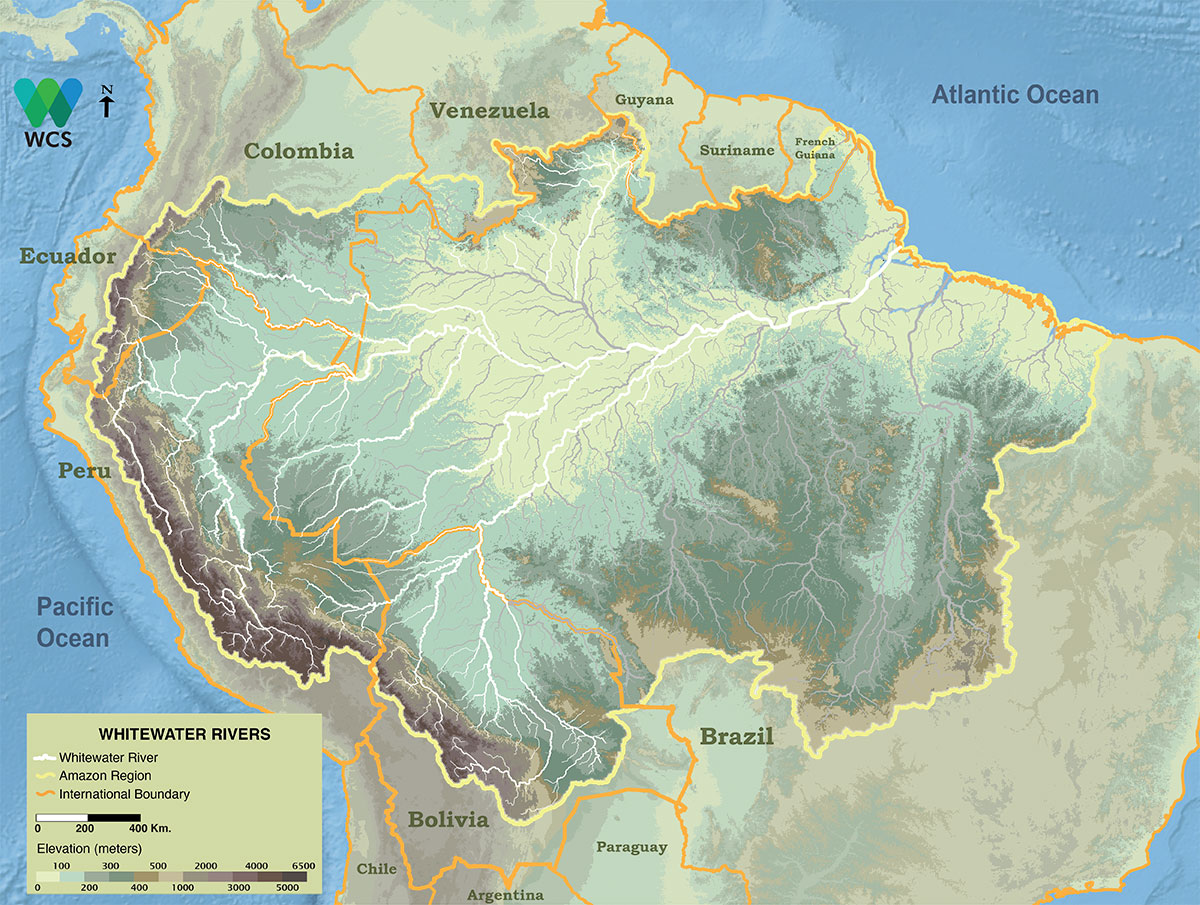 Whitewater rivers arise mostly in the Andes and are characterized by high turbidity and nutrient content. Because of the large number of headwaters in the Andes the Amazon River is rendered a whitewater river.